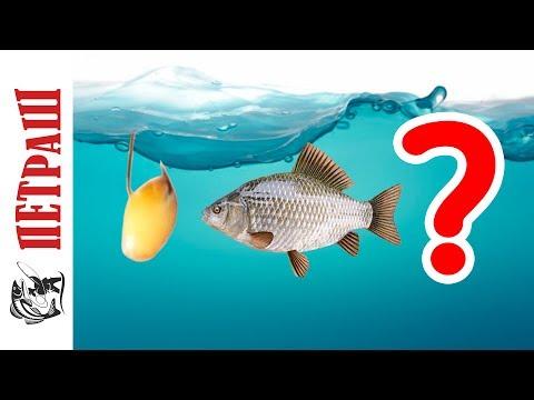 Как выбрать КРЮЧКИ для рыбалки? Рыболовные крючки Фанатик!