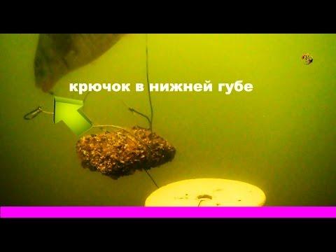 Поклевка на КЛАССИЧЕСКИЙ МАКУШАТНИК. Краткая схема снасти. underwater. Рыбалка, Fishing câu cá