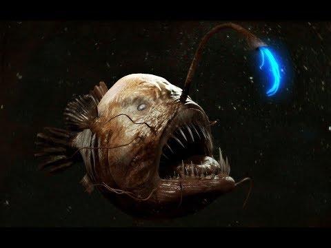 Исчадия ада - Глубоководный удильщик (морской чёрт)