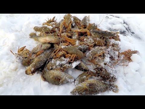 Зима! Проверка Китайских Раколовок! Готовимся к Зимней Ловле Раков!