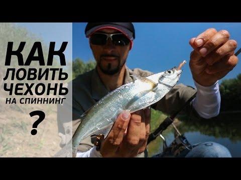 Как ловить чехонь на спиннинг. Андрей Старков. [FishMasta.ru]