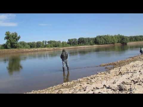 Ловля головля на кузнечика.Место ловли река Волга
