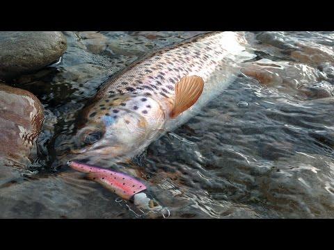Ловля форели. Рыбалка на горных реках. Отчет