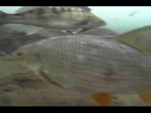 Окунь залипает на перепад давления, плотва активна. Winter fishing, spring, ice video, the last ice!