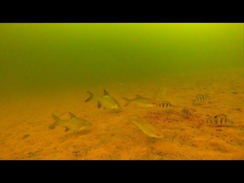 Камера на зимней рыбалке, Подводные съемки подо льдом