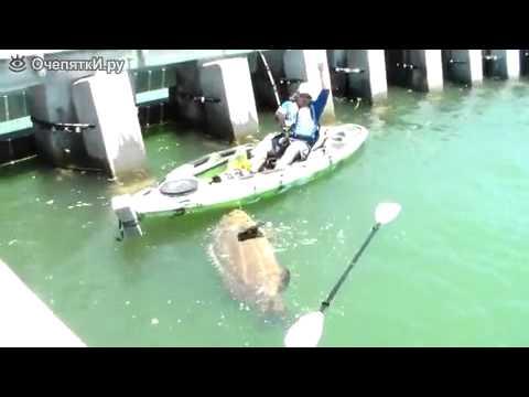 Вот это рыбалка окунь 300 кг