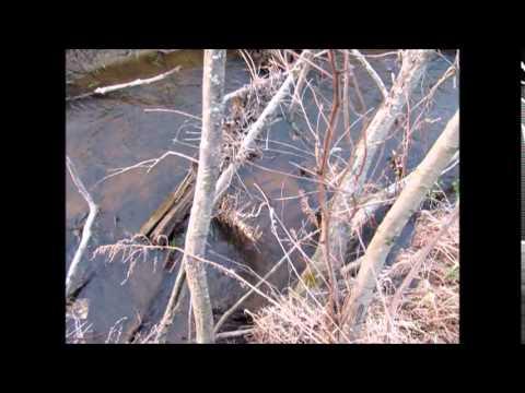 Рыбалка 3. Плотва зашла на нерест