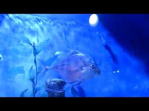 Рыбы вомеры (КОЭКС, Сеул), часть 1