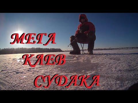 СУДАК ПО ПЕРВОМУ ЛЬДУ. Fishing for walleye on live bait in winter