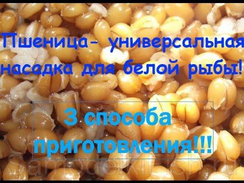 Пшеница-отличная и универсальная насадка и прикормка. 3 способа приготовления пшеницы!