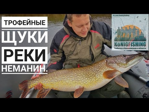 Рыбалка в Калининграде и области.Трофейные щуки реки Неманин.