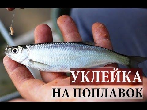 Сумасшедший Клев Уклейки. Поплавочная рыбалка.