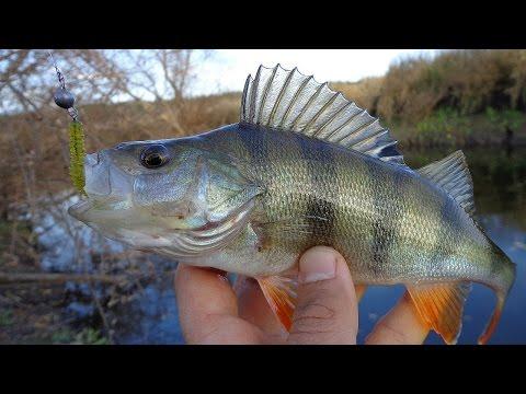 Ловля окуня на джиг приманки. Catching bass on jig.