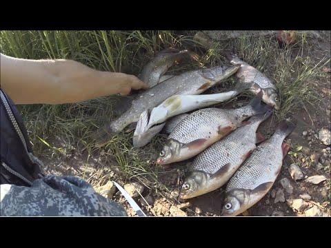 Сумасшедшая рыбалка. Ловля стерляди на древние закидушки. Надербанили огромных язей на спиннинг.