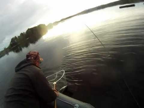 Ловля сига летом на озере Сторуман
