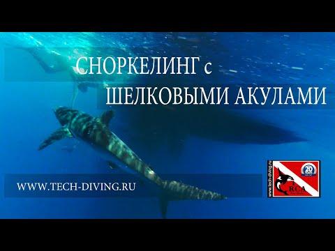 Шелковые Акулы