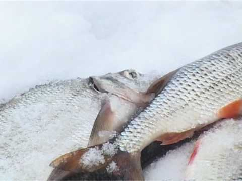 По клевым местам. Зимняя рыбалка на Истринском водохранилище