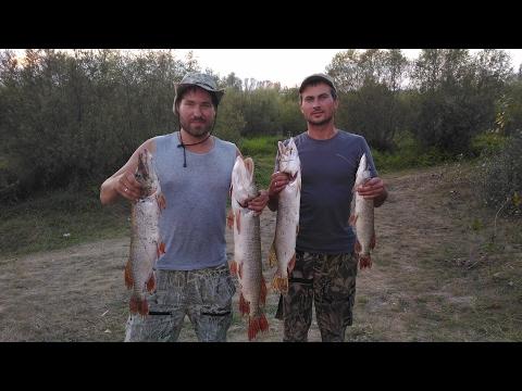 Рыбалка на щуку на джиг. Иртыш, Омск, август 2016 год, серия 3