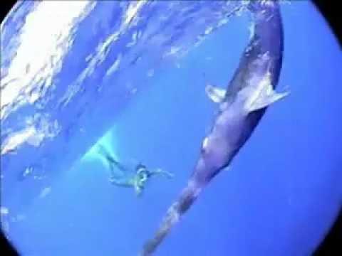 Рыба меч - редчайшие кадры