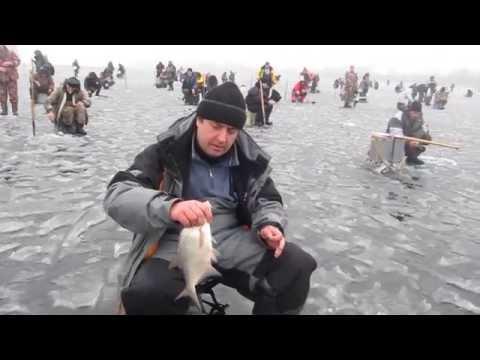Ловля белой рыбы на гирлянду. Ловля подлещика, плотвы, густеры на мормышку
