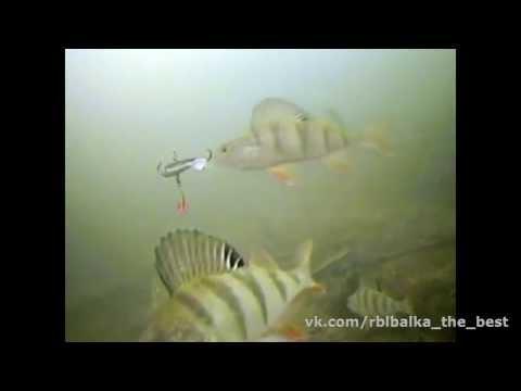 Подводная ловля Окуня на балансир !!!