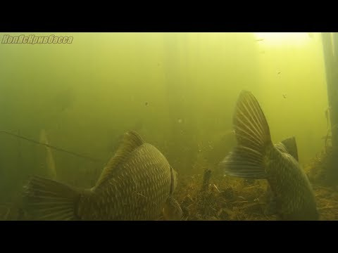 Что происходит под водой когда не клюёт !