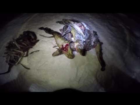 Зимняя ночная рыбалка на налима декабрь / Winter night fishing for burbot December