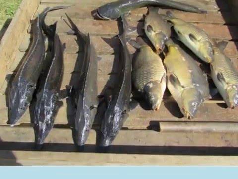платная рыбалка в ПИРОГОВО - Коргашино
