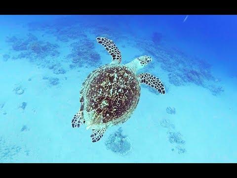 Рыбы Красного моря c названиями Каталог 1й фильм Опасные (с 13:22 фильма) Египет Иордания Акаба