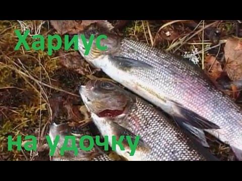 Диалоги о рыбалке -169- Красноярск, Енисей, ловля хариуса на удочку.