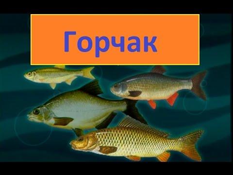 Диалоги о рыбалке -122 - Московский горчак