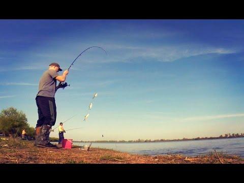 Ловля воблы на реке Волга. Ловля на закидушку. Ловля на червя.