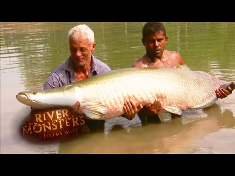 The BIGGEST Arapaima Jeremy Wade Has EVER Caught | ARAPAIMA | River Monsters