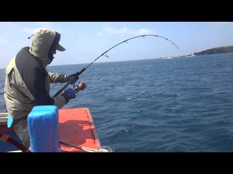 Супер рыбалка. Желтохвост (японская лакедра) 9 кг