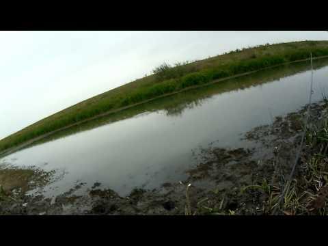 Буффало в ильменях на поплавок! Рыбалка и отдых на живописном острове, база Ахтуба клуб