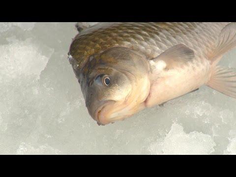 """Рыбак Рыбаку 534 """"Ловля карася со льда""""."""