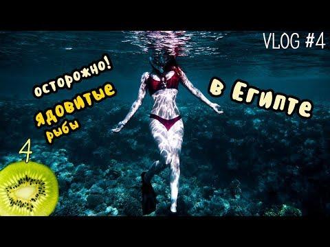 как остаться без ноги. ядовитые рыбы в Египте    vlog 4