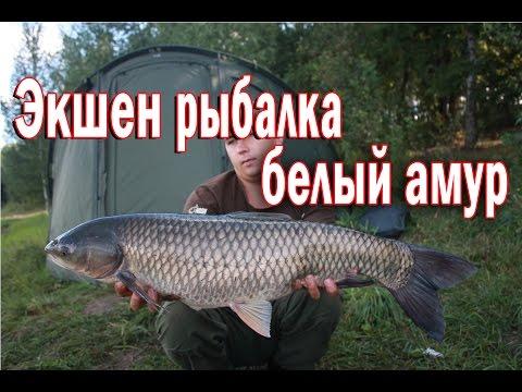 Ловля белого амура. Экшен рыбалка.