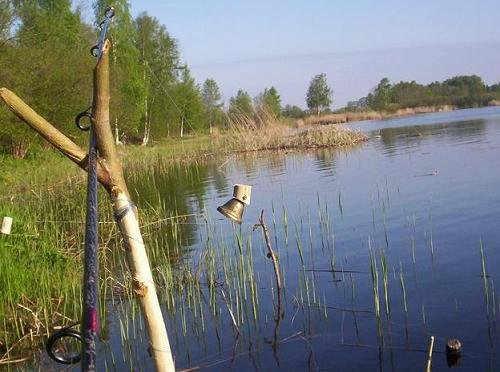 Фидерная и донная ловля - как правильно ловить рыбу фидерной и донной ловлей, рыболовные туры с фидерной и донной ловлей