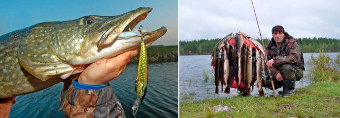 Как ловить щуку осенью - уловистые приманки