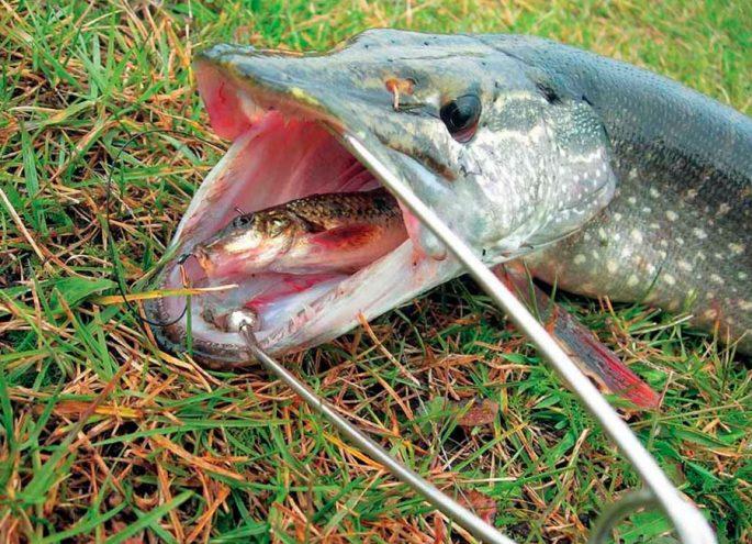 Как рыбачить на живца