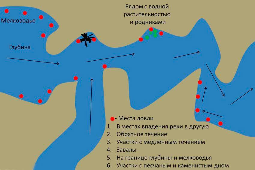 Выбор места при ловле карпа на реках Прежде чем закинуть