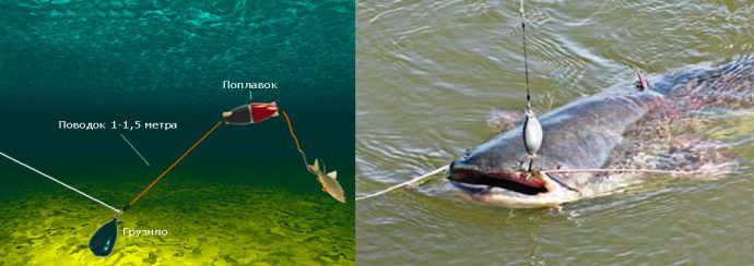 Снасти для ловли сома с берега и с лодки