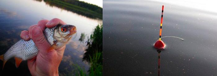 Рыбалка на плотву в летнюю пору поплавочной удочкой