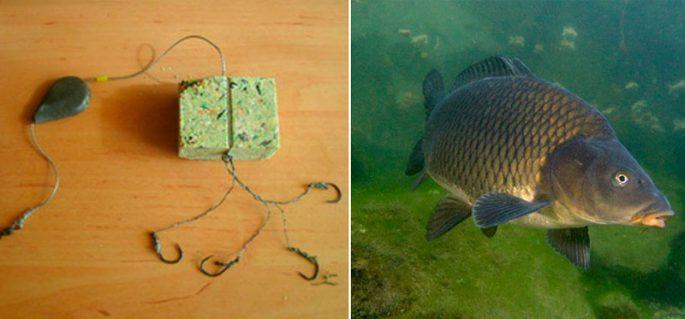 Рыбная ловля на жмых - Насадки