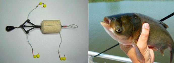 Снасти для ловли толстолобика - ловля на донную снасть, на технопланктон, наживка