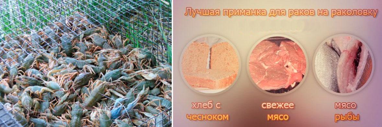 Прикормка для рака из чеснока