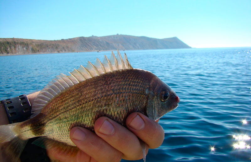 Морская рыбалка краснодарском крае