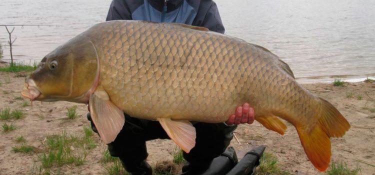 Как ловить большую рыбу