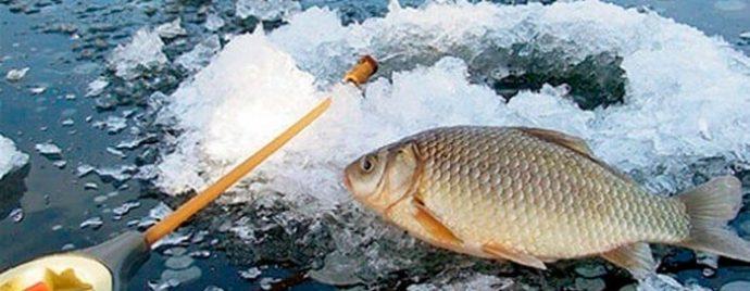 Ловля карася зимой на мормышку и поплавок. Наживки, прикормка и снасти для зимней рыбалки на карася